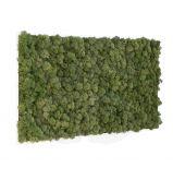 Cadre végétal Khloé en lichen 60 X 60 cm - Le cadre